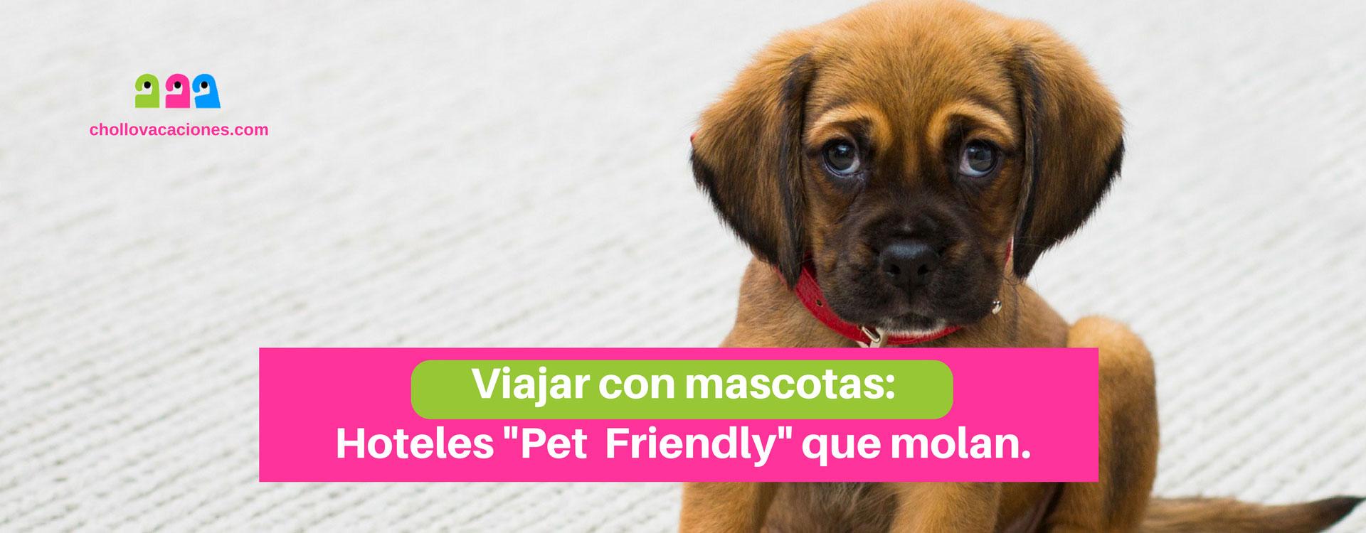 Viajar con perro: Hoteles que admiten perros y mascotas pet friendly perfectos.