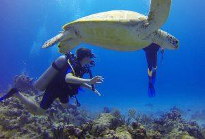 tortugas-riviera-maya